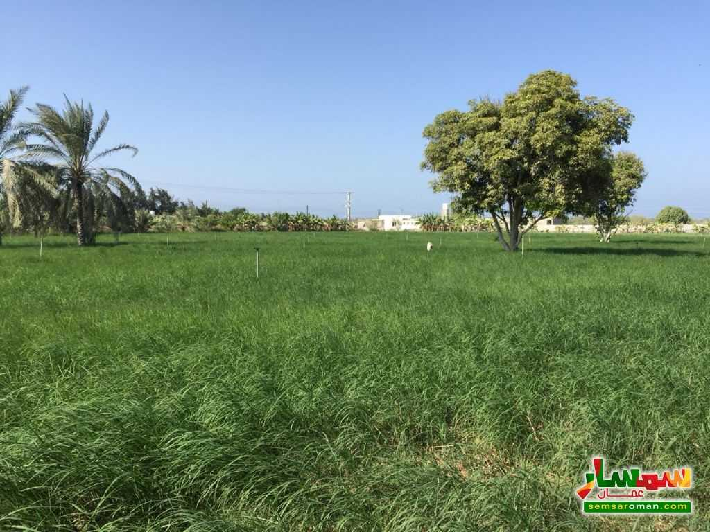 Ad Photo: Farm 24141 sqm in Al Batinah